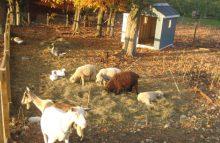 farm, animals